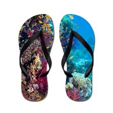 Lyretail anthias and soft corals Flip Flops