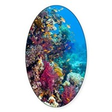 Lyretail anthias and soft corals Decal