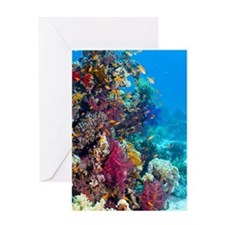 Lyretail anthias and soft corals Greeting Card