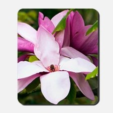 Magnolia ' Vulcan' Mousepad