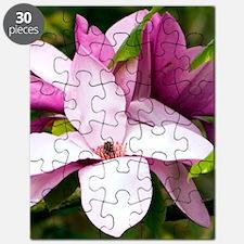Magnolia ' Vulcan' Puzzle