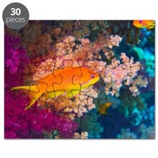 Lyretail anthias and coral Puzzle