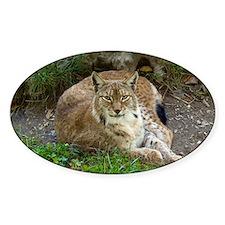 Lynx Decal