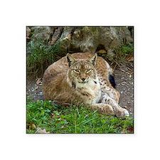 "Lynx Square Sticker 3"" x 3"""