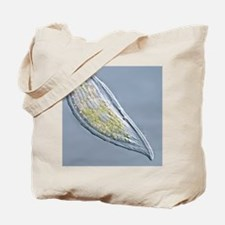 Loxophyllum ciliate, light micrograph Tote Bag