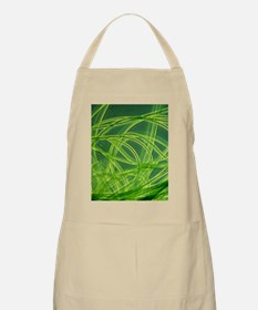 LM of filamentous blue-green algae Apron