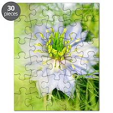 Love in the mist flower (Nigella sp.) Puzzle