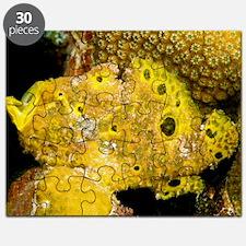 Longlure frogfish Puzzle