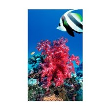 Longfin bannerfish and soft co Decal