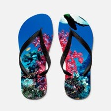 Longfin bannerfish and soft corals Flip Flops