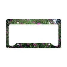 Lord Anson's Pea License Plate Holder