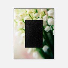 Lily of the valley (Convallaria maja Picture Frame