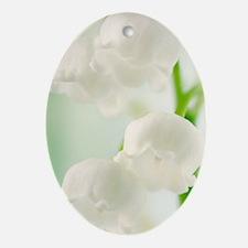 Lily of the valley (Convallaria maja Oval Ornament