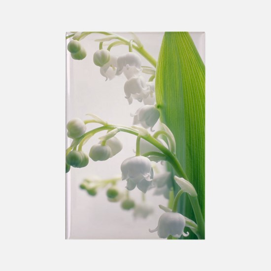 Lily of the valley (Convallaria m Rectangle Magnet