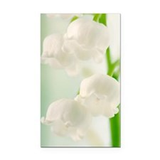 Lily of the valley (Convallar Rectangle Car Magnet
