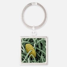 Lily pollen grain on rosemary leaf Square Keychain