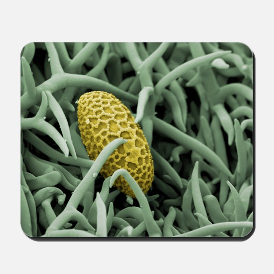 Lily pollen grain on rosemary leaf, SEM Mousepad