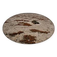 Lichen (Teloschistes capensis) Decal