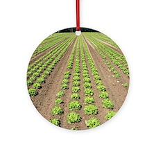 Lettuce crop Round Ornament