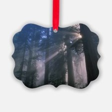 Light coming through redwood tree Ornament
