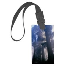 Light coming through redwood tre Luggage Tag