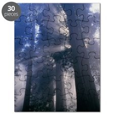 Light coming through redwood trees Puzzle