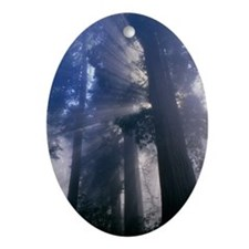 Light coming through redwood trees Oval Ornament