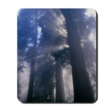 Light coming through redwood trees Mousepad