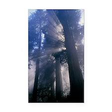 Light coming through redwood  Rectangle Car Magnet