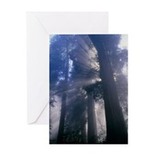 Light coming through redwood trees Greeting Card