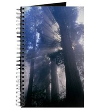 Light coming through redwood trees Journal