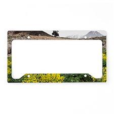 Leontice leontopetalum License Plate Holder