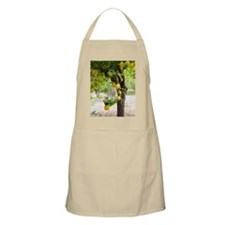 Lemon tree (Citrus limon) Apron
