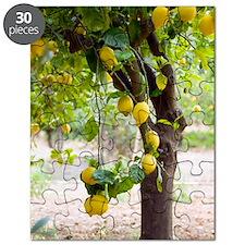 Lemon tree (Citrus limon) Puzzle
