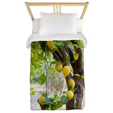 Lemon tree (Citrus limon) Twin Duvet