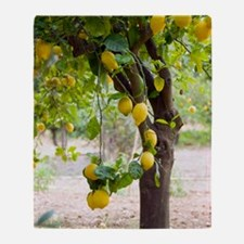 Lemon tree (Citrus limon) Throw Blanket