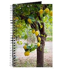 Lemon tree (Citrus limon) Journal