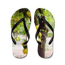 Lemon tree (Citrus limon) Flip Flops