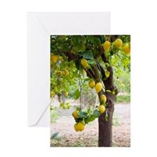 Lemon tree (Citrus limon) Greeting Card