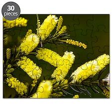 Lemon bottlebrush (Callistemon pallidus) Puzzle