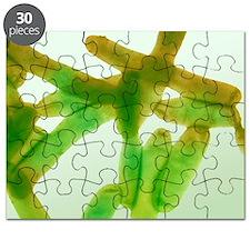 Legionella bacteria, light micrograph Puzzle
