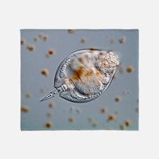 Lepadella rotifer, light micrograph Throw Blanket