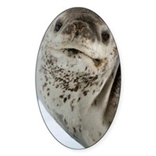 Leopard seal Decal