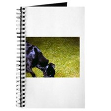 Xander Dog Journal