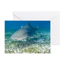 Lemon shark and remoras Greeting Card