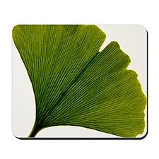Leaf of Ginkgo biloba Mousepad