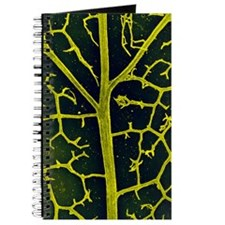 Leaf veins of the common ivy Journal