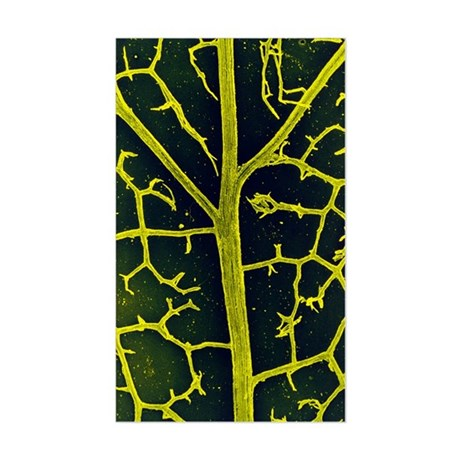 Leaf veins of the common ivy Sticker (Rectangle)