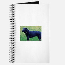 Xander Dog Journal
