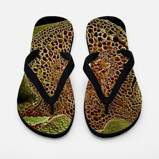Leaf midrib, SEM Flip Flops